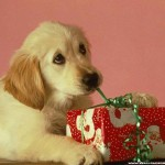 Top 9 Recommendations for Gift Giving to Animal Charities for the Holidays; &amp; Twyla Francois, Canadian Horse Defence Coalition