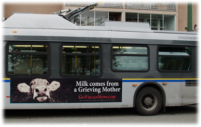 CCTV in UK Slaughterhouses, and GoVeganNow bus ad campaign