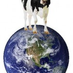 meat-dairy-environment