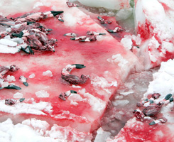 Campaigns Against the Cruelty to Animals About the Canadian Seal Hunt, Seattle VegFest Preview